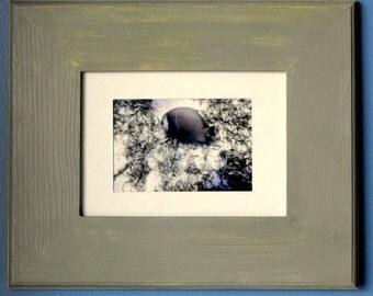 Underwater Picture - Picture Frame - Beach Decor (BC-14)