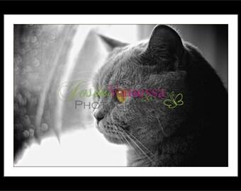 Cat's Eyes Art Print Photography Various Sizes