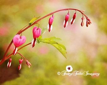 Bleeding Heart Flower Photography INSTANT Download pink fleur floral closeup vibrant color lush garden print bokeh summer romance bloom