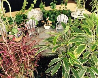 Fairy Garden Patio Miniture Garden Outdoor Indoor Accessory