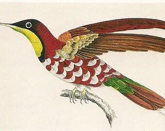 Beautiful Hummingbird Print