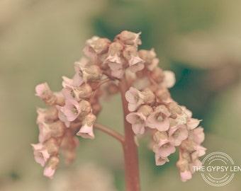 NC-YRBG-022 - Photo Notecard - Colorado - Flower