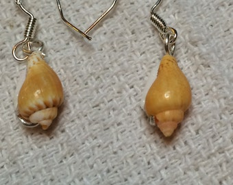 seashell and silver wire earrings