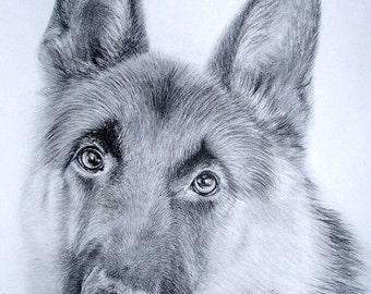 Custom pet portrait - Graphite pet portrait