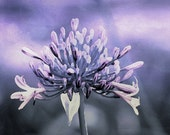 Metallic Purple Flower Photographic Art Digital Download Commercial Use