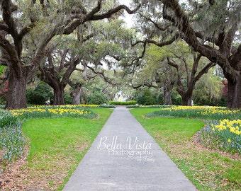 Digital Download: Brookgreen Gardens Pathway