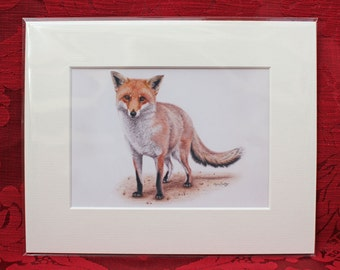 Red Fox Wildlife Art Native Species Print
