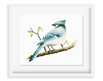 Blue jay Painting - Watercolor Blue jay - 8 by 10 print - Watercolor Painting, Archival Print, Home Decor, Nature Art
