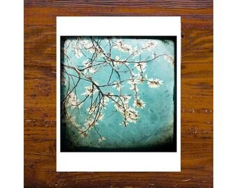 8x8 print [JCP 195] - White Blossom 3