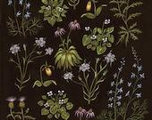 Little Wildflowers - Print