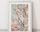 Cherry Blossoms Photograph - Fine Art Photography - Home Decor Pink