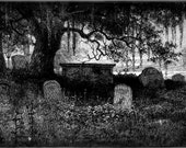 Garden of Graves - Halloween Perfume Oil - Chill Night Air Damp Earth and Stone Oud Wood Wilted Rose Gardenia Gothic Perfume Oil