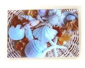 Sea Shells, glass cutting board, shells cutting board , sea life, sea art, shells art, shells cutting board