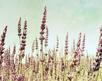 "Lavender field photograph   rustic botanical print   mauve pale purple   aqua blue   nature home decor   8x10  ""Lavandula"""