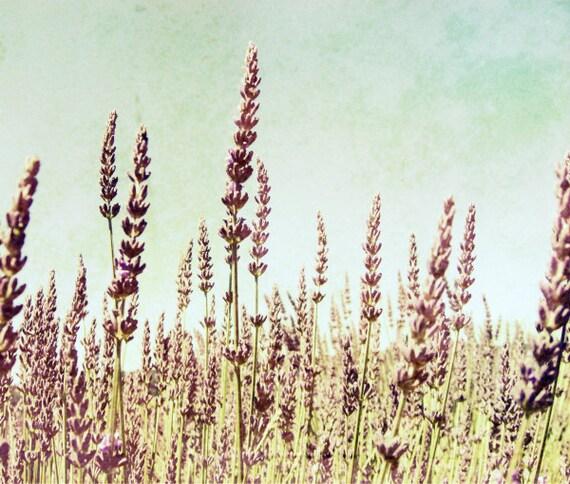 Botanical photography print lavender field rustic mauve purple blue wall art - Lavandula