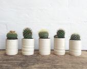Plant Pot Medium