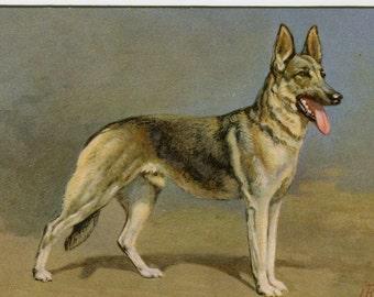 Vintage Alsatian wolfhound, vintage Swiss dog postcard, artist signed j Rivst