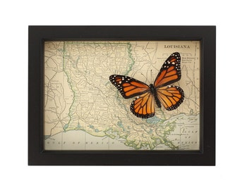 Vintage map of LOUISIANA with native butterfly UV blocking glass