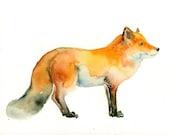 FOX Original watercolor painting 10x8inch
