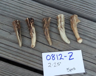 Gnarly Deer Antler Points Tips- 5 pieces-Choice of Style - Lot No. 0812-Z