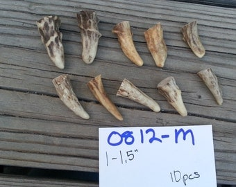Gnarly Deer Antler Points Tips- 1-1.5 inches- 10 pcs- Choice of Style - Lot No. 0812-M