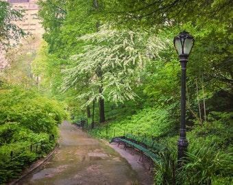 Central Park Art, New York Photograph Spring Photography Rain Springtime Flowers Photo nyc Cherry Trees nyc84