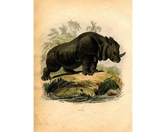 1837 RHINOCEROS PRINT original antique african safari animal engraving