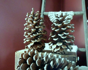"Long Leaf HUGE 8"" Pine Cones LOWEST PRICE  North Carolina Rustic Home cottage country Lodge cabin Yard Decor Christmas Tree Mantel Garland"