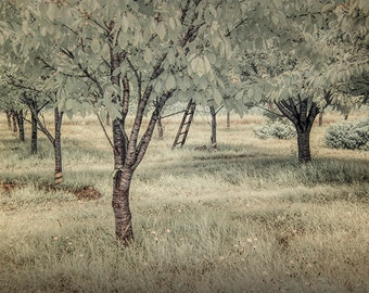 Cherry Orchard in Infrared at the Cherry Point Farm Market near Shelby Michigan No.0038 Summer Fine Art Landscape Photography