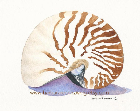 Nautilus Art Print, Seashell Painting, Seashell Wall Art, Beach Decor, Watercolor Beach Art, Shell Watercolor, Beach Wall Art, Nautilus Gift