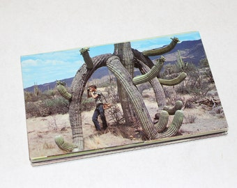 25  Vintage Arizona Chrome Postcards Blank - Wedding Guest Book