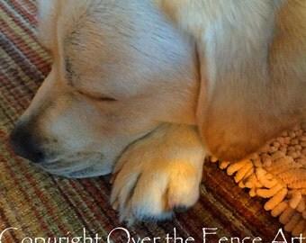 YELLOW LABRADOR card PUPPY Naps in Sunny Room Animal Art Animal Photography Dog Art Dog Photography