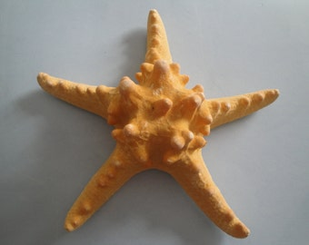 "Seashells Sea Shell 7.2"" Large Knobby Starfish"