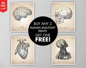 Human Anatomy Print Set, Buy 3 Get 1 Free, Human Anatomy Prints, Human Anatomy Art Prints, Human Anatomy Print Sale, Anatomy Art Prints Set
