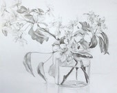 Original Pencil drawing. Blossoming apple tree branch in a jar.