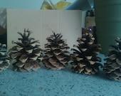 Austrian Pinecones