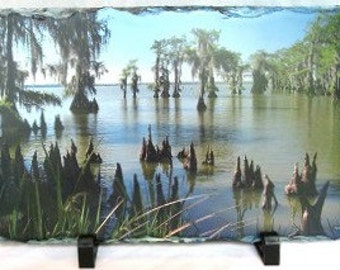 Louisiana Swamp on Slate - Louisiana Photography - Original Photo - Louisiana Home Decor - Louisiana Bayou - For the Home - Original Gift