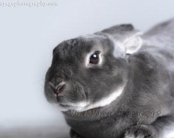 Rabbit Photograph, Animal Art, Bunny Decor, Gray Rabbit Photo, Nursery Wall Art, Grey Bunny Photo, Animal Photography, Rabbit Art Print