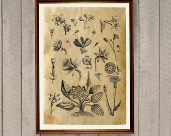 Rustic decor Flower print Floral art Botanical poster AK427