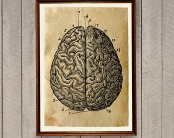 Anatomical print Brain anatomy poster Macabre decor AK637