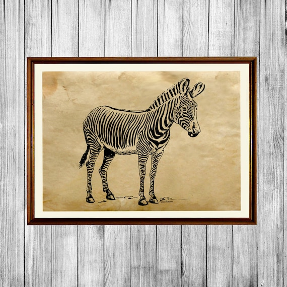 Cabin Home Decor Zebra Poster Animal Art Print Ak418 By