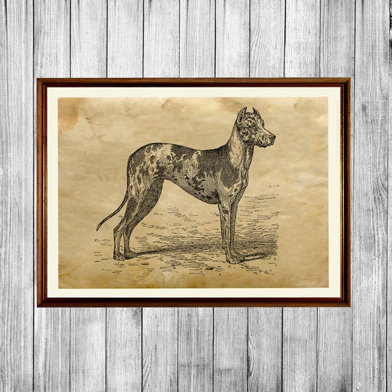 Dog Poster Great Dane Print Rustic Home Decor Ak603 By Home Decorators Catalog Best Ideas of Home Decor and Design [homedecoratorscatalog.us]