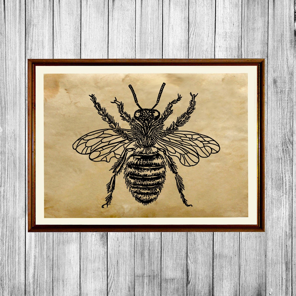 Bee print insect art poster retro home decor ak782 for Bee decorations for the home
