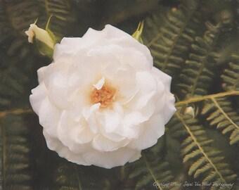 White Rose Photography, Marriage, Spirituality, New Starts, modern home decor, botanial print