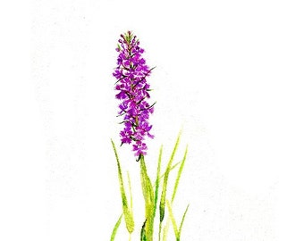 Habenaria or Rein Orchid Purple Fringed Wild Orchid Blank Note Card