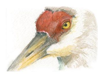 Watercolor Crane, Crane Print, Whooping Crane Print
