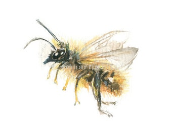 Watercolor Bee, Bee Print, Honey Bee Print