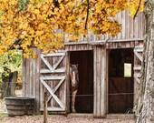 Barn Pony