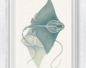 Couple of stingrays - Home decor print  , wall art sea life print- Coastal home wall art SPA044