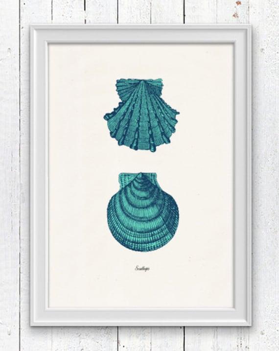 Vintage sea shell Sallops  - Vintage sea shell print-  seashells wall art home decor -A 4 print SPS033